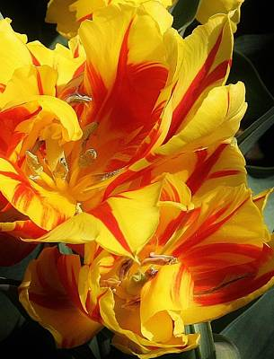Photograph - Spring Beauty by Bruce Bley