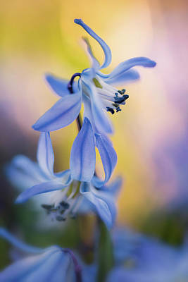 Photograph - Spring Beauty by Kim Carpentier