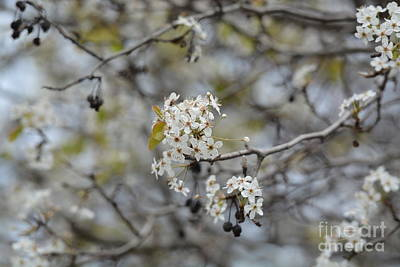 Photograph - Spring Begins by Maria Urso