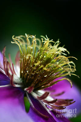 Photograph - Spring Bling by Kelly Nowak