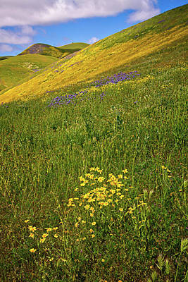 Photograph - Spring Bliss On The Carrizo Superbloom 2017 by Lynn Bauer