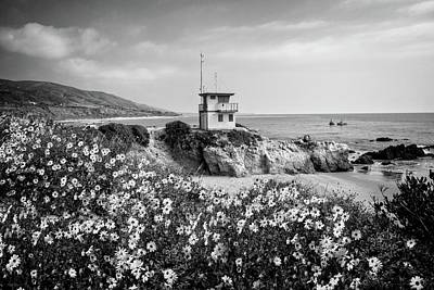 Photograph - Spring Bloom At Leo Carrillo State Beach - Bw by Lynn Bauer