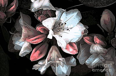 Photograph - Spring Bloom by Erica Hanel