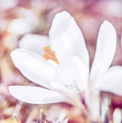 Photograph - Spring Bloom by Jennifer Grossnickle