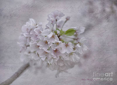 Photograph - Spring Bloom by Linda Blair