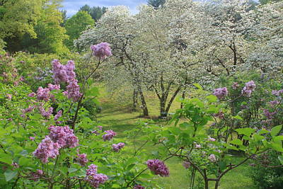Photograph - Spring Blooms At Lilac Land  by John Burk