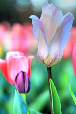Photograph - Spring Blooms II by Carol Montoya