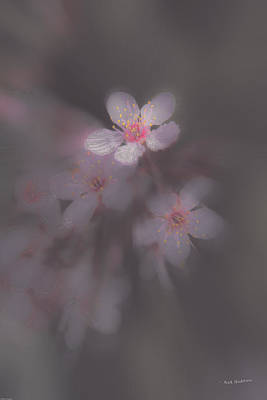 Photograph - Spring Blooms In The Fog Of Late Winter by Mick Anderson