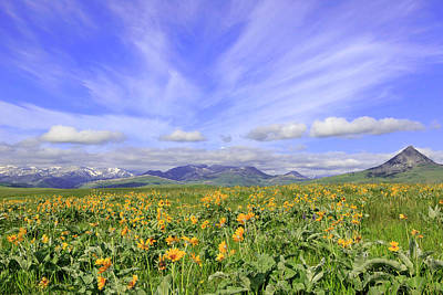 Photograph - Spring Blooms On The Rocky Mountain Front by Jack Bell