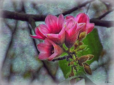 Photograph - Spring Blossom by Hanny Heim