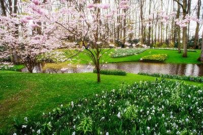 Photograph - Spring Blossom In Keukenhof Garden by Jenny Rainbow
