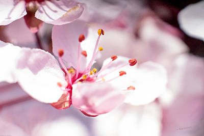 Photograph - Spring Blossom by Mick Anderson