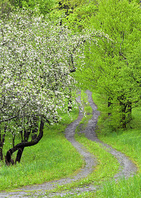 Photograph - Spring Blossom Path by Alan L Graham