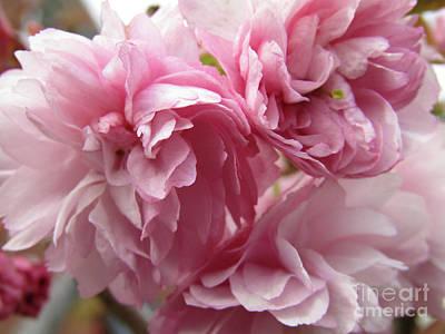 Spring Blossoms #1 Art Print