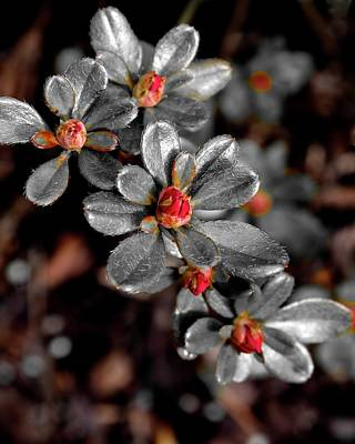 Photograph - Spring Blossoms 2 by Jerry Sodorff