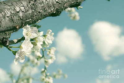 Photograph - Spring Blossoms And Puffy Clouds by Cindy Garber Iverson