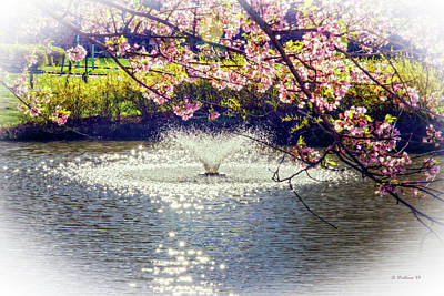 Photograph - Spring Blossoms At Quiet Waters by Brian Wallace