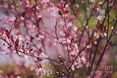 Christina Conway Royalty-Free and Rights-Managed Images - Spring Blossoms by Christina Conway