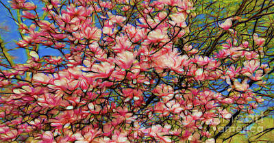 Photograph - Spring Blossoms by Colin Cuthbert