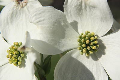 Art Print featuring the photograph Spring Blossoms by Diane Merkle