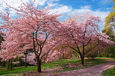Photograph - Spring Blossoms by Doug Oriard