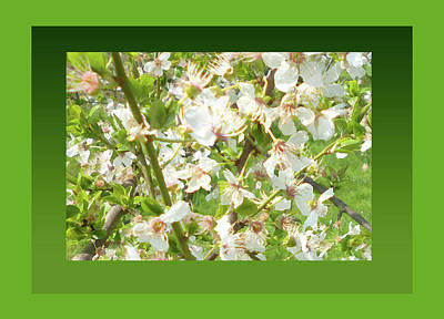 Photograph - Spring Blossoms In Green by Laura Greco