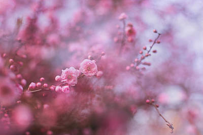Spring Blossoms In Their Beauty Art Print