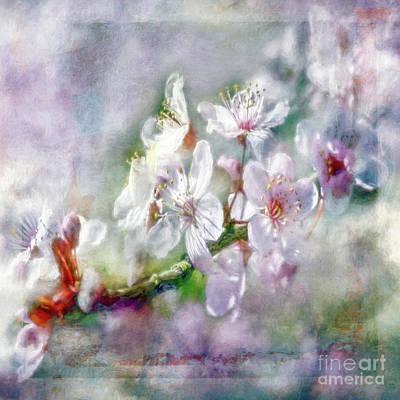 Photograph - Spring Blossoms by Jean OKeeffe Macro Abundance Art