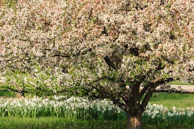 Photograph - Spring Blossoms by Joni Eskridge