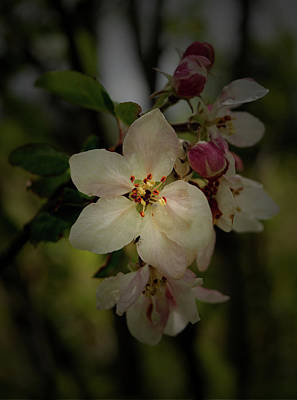 Photograph - Spring Blossoms by Karen Harrison