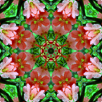 Digital Art - Spring Blossoms by Kathleen Stephens