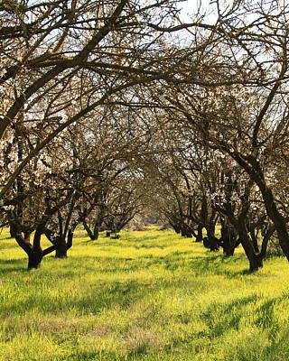 Lodi Photograph - Spring Blossoms Lodi Ca by Troy Montemayor