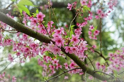 Photograph - Spring Blossoms by Lynn Bauer