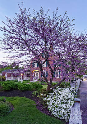 Photograph - Spring Blossoms On Main Street In Freeport, Maine #50609 by John Bald