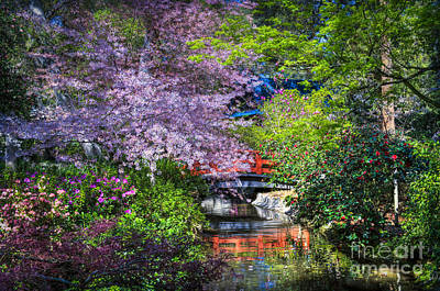 Photograph - Spring Blossoms Reflections by David Zanzinger