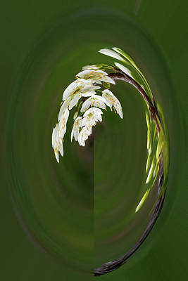 Photograph - Spring Blossoms by Rick Strobaugh