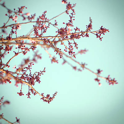 Photograph - Spring Blossoms by Tim Reich