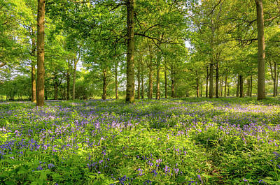 Photograph - Spring Blue And Green by Hazy Apple