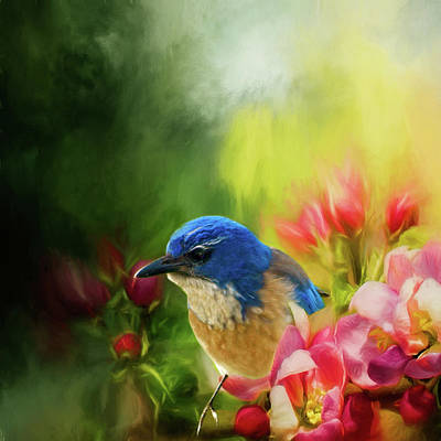 Photograph - Spring Blue Jay by Diane Schuster