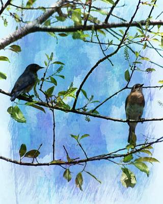 Photograph - Spring Bluebirds by Sheri McLeroy