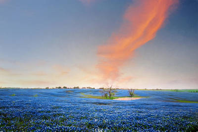 Texas Bluebonnet Wildflowers Landscape Flowers Spring Photograph - Spring Bluebonnets In Texas by David and Carol Kelly
