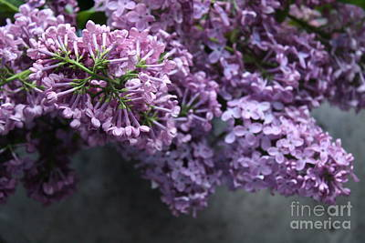 Photograph - Spring Bouquet by Mary-Lee Sanders