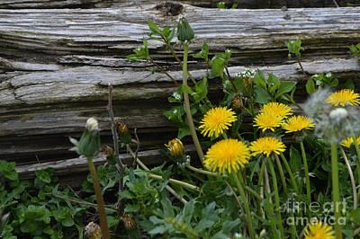 Photograph - Spring Bouquet by Renie Rutten