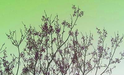 Photograph - Spring Branches Mint by Marisela Mungia