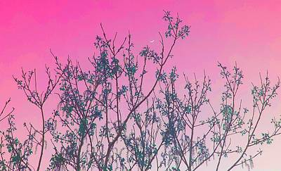 Photograph - Spring Branches Rose by Marisela Mungia