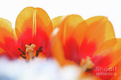 Photograph - Spring Breeze by Afrodita Ellerman