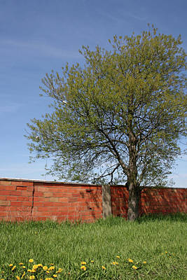 Photograph - Spring Brick by Dylan Punke
