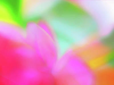 Photograph - Spring Brights by Menega Sabidussi