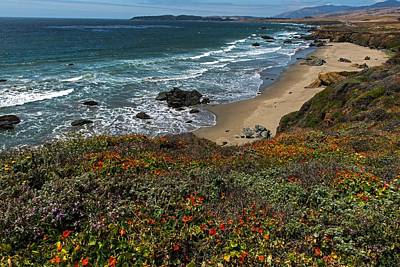 Photograph - Spring Brings Colorful Wildflowers On The Pch  by Willie Harper