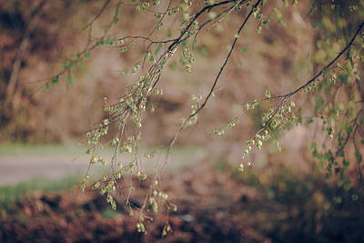 Photograph - Spring Buds by Amber Flowers